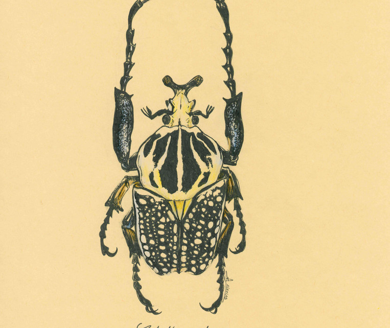 dessin_insecte_3.jpg