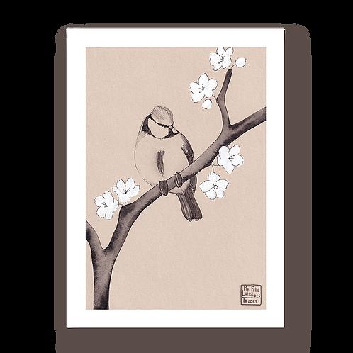Sakura à mésange #3