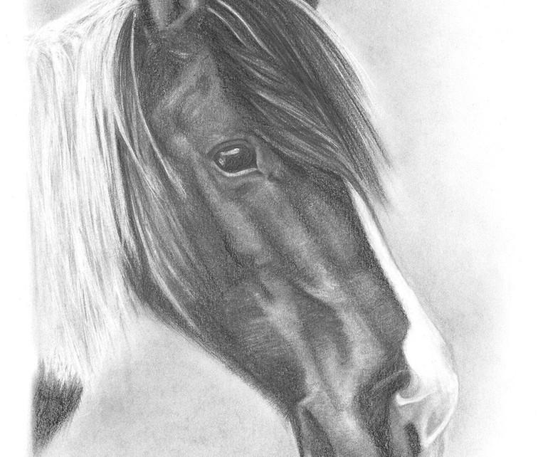 portrait_cheval.jpg