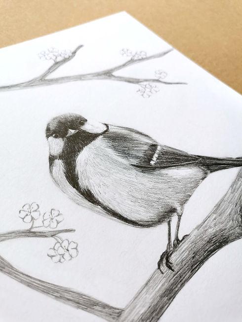 dessin_oiseau_crayonapapier.jpg