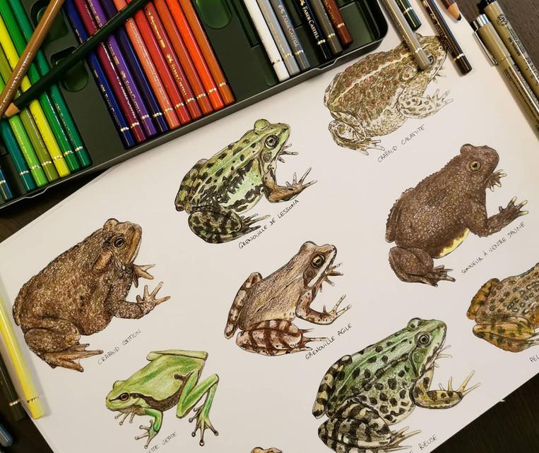 dessin_naturaliste.jpg