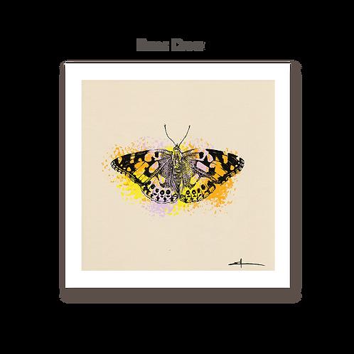 Papillon Belle Dame