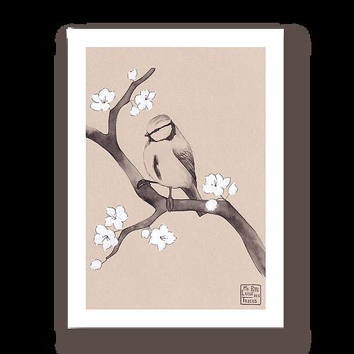 Sakura à mésange #2
