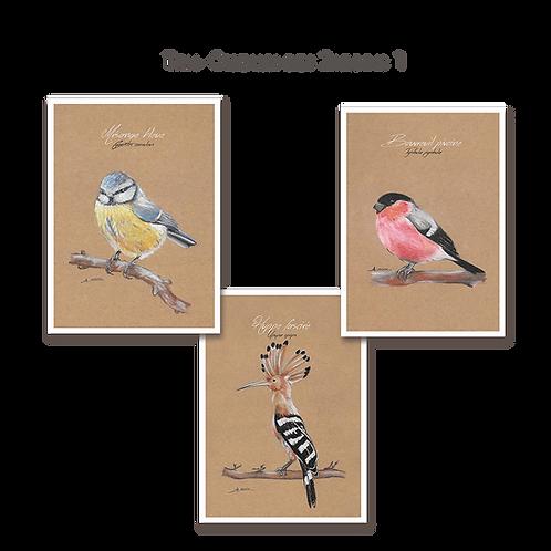 Trio Oiseaux des Jardins 1