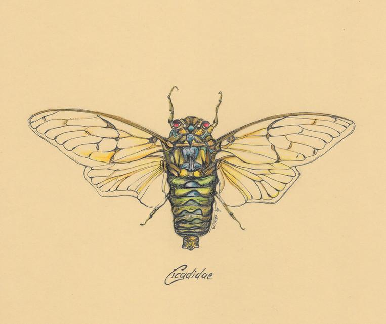 dessin_insecte_1.jpg