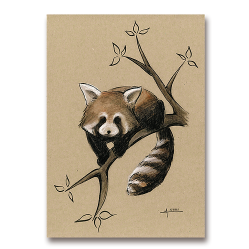 Panda roux marron