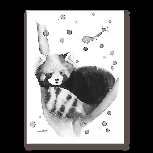 Panda roux N&B