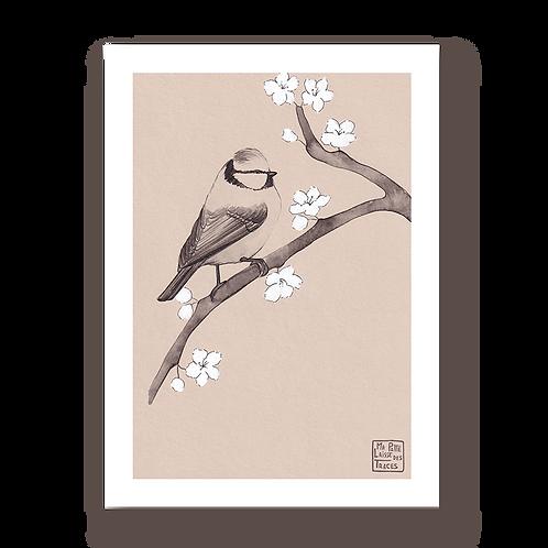 Sakura à mésange #1