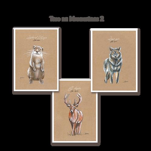 Trio de Mammifères 2