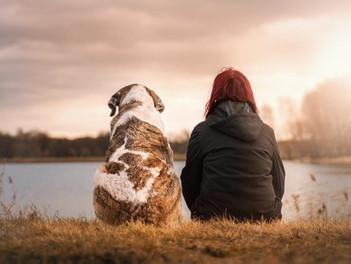 Wissenswertes zur Adoption von Hunden