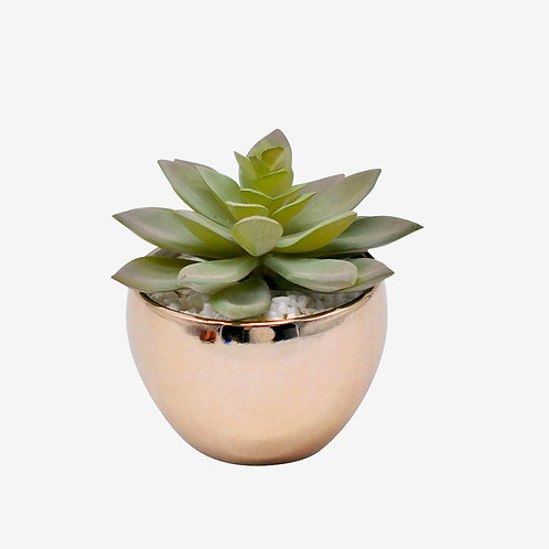 Silver potted faux Pachyveria