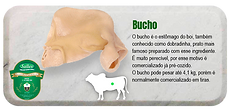 bucho-s.png