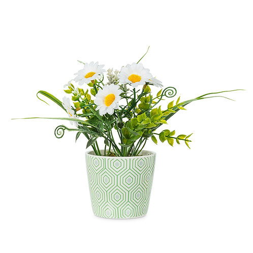 Potted Daisy