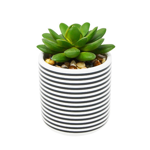 Mini Striped Pot with Plant
