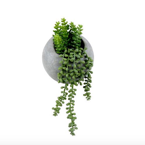 Succulent Pearls in Grey Pot