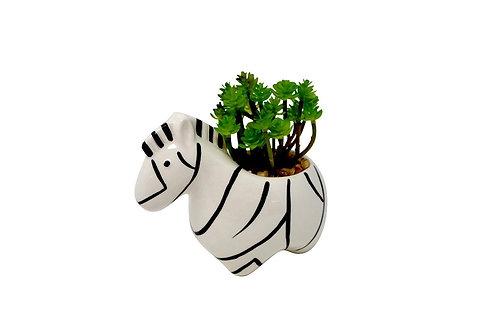 Zebra Pot with Sedum