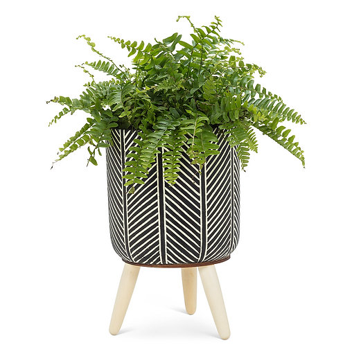 Zebra Tripod Planter