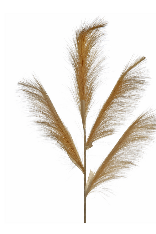 Pampas Grass 4 Stem