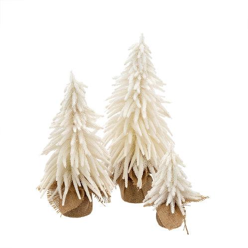 Festive Fir Trees