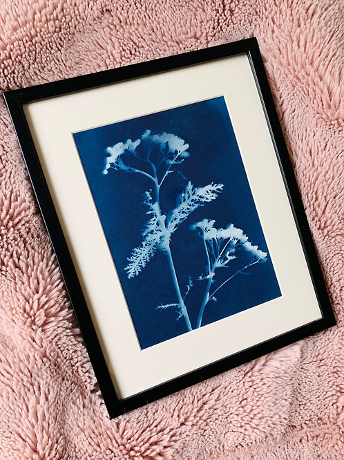Original Cyanotype Print of Flower