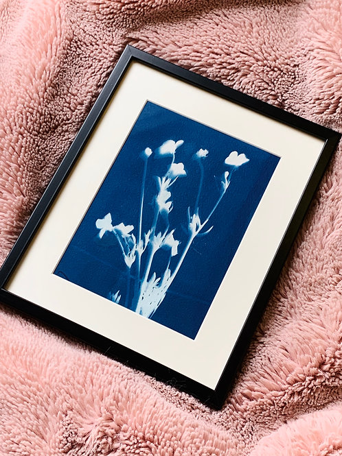 Original Cyanotype Print of Flower
