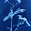 Thumbnail: Original Cyanotype Print of Flower