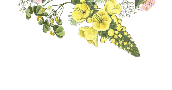 HP-flowers_edited.png