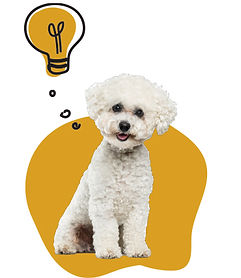 poodle-thought.jpg