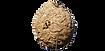frelon_4-removebg-preview.png