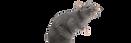 shutterstock_536505532__1_-removebg-prev