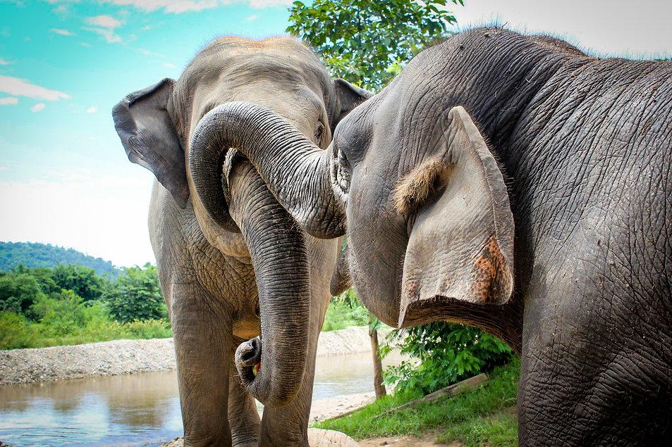 Elefantes, elephants
