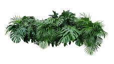tropicals.jpg