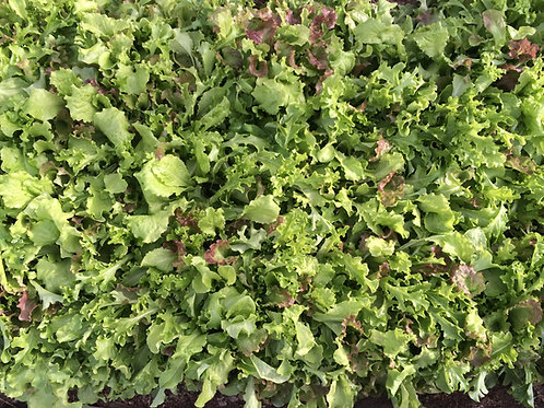 Salad greens by the lb
