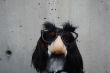 Dog wearing Costume