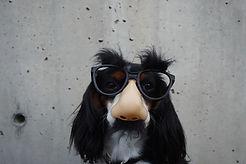 Hond kostuum dragen