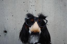 Hund trägt Kostüm
