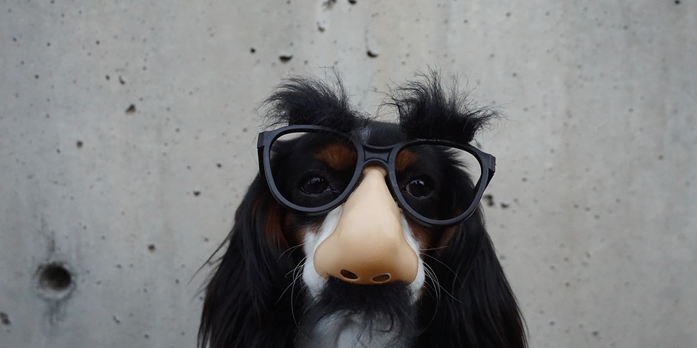 Dog Costume Contest and Parade
