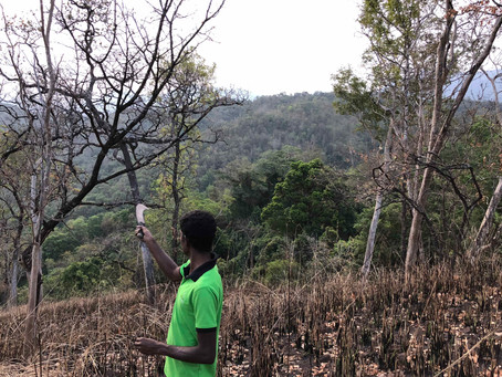 Assisted Natural Regeneration in UVA province