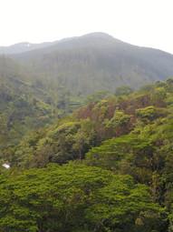Belipola forest garden