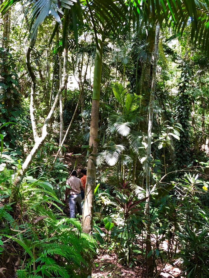 35 years analog forest designed by Dr. Ranil Senanayake