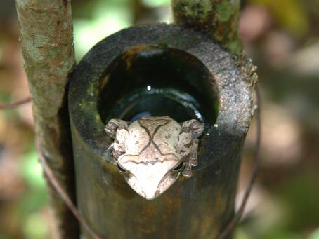 Ecosystem restoration with Analog Forestry