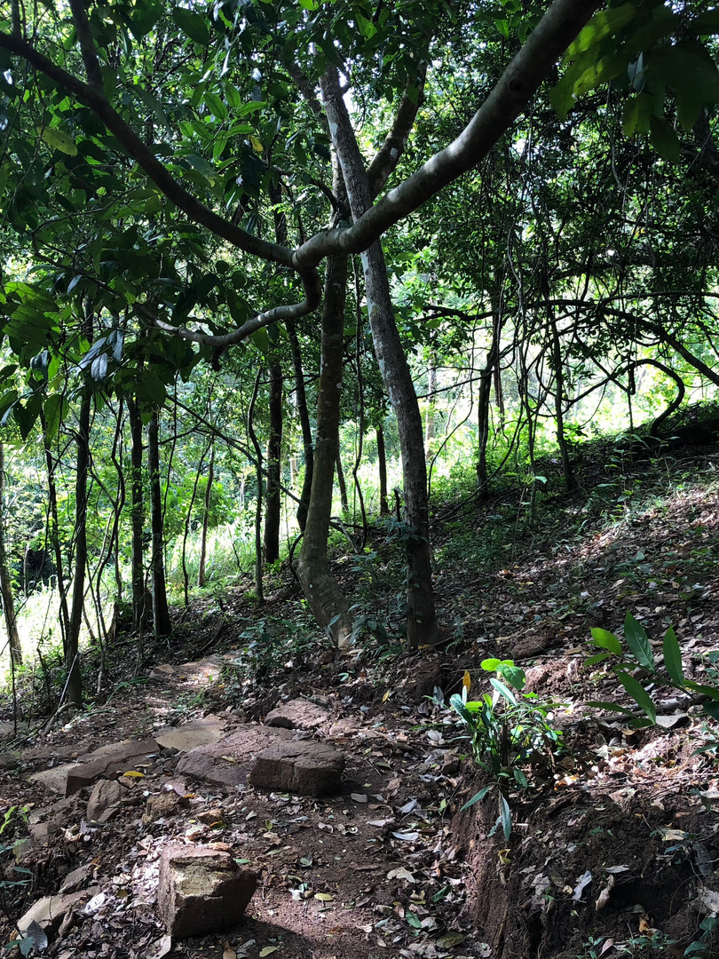 Mitigating heat stress with forest canop