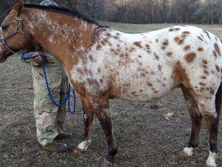 The Year of the Appaloosa