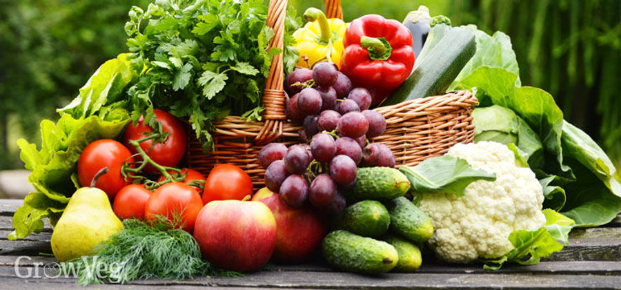 Organically grown vegetable, herbs, and fruit plants