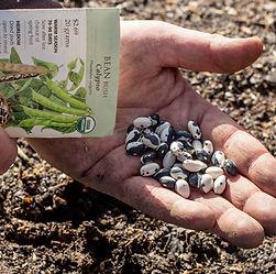 Organic Seeds, non gmo