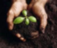 dirt_soil_lg.jpg