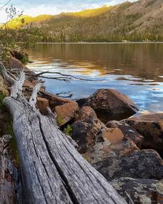 Along the Log