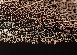 Nature's Lace 2