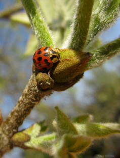 Ladybug's Morning