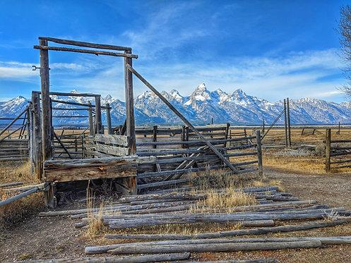 Teton Cattle Chute